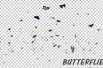 Photo of Butterfly – Videohive 19680532