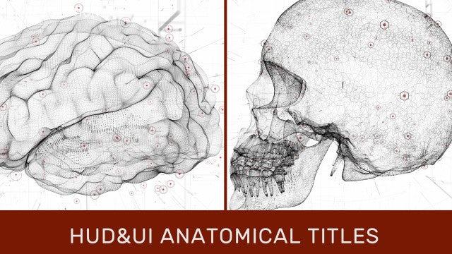 Photo of HUD UI Anatomical Titles – MotionArray 989989